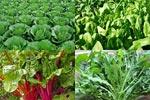 Магний в овощах
